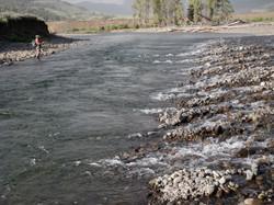 Fishing on the Lamar River; YNP