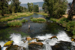 Fish on!; Dick's Riffle on Depuys Spring Creek