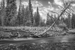 Soda Butte Creek; YNP (2)