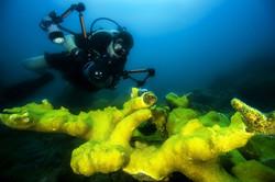 diver-108880_1920