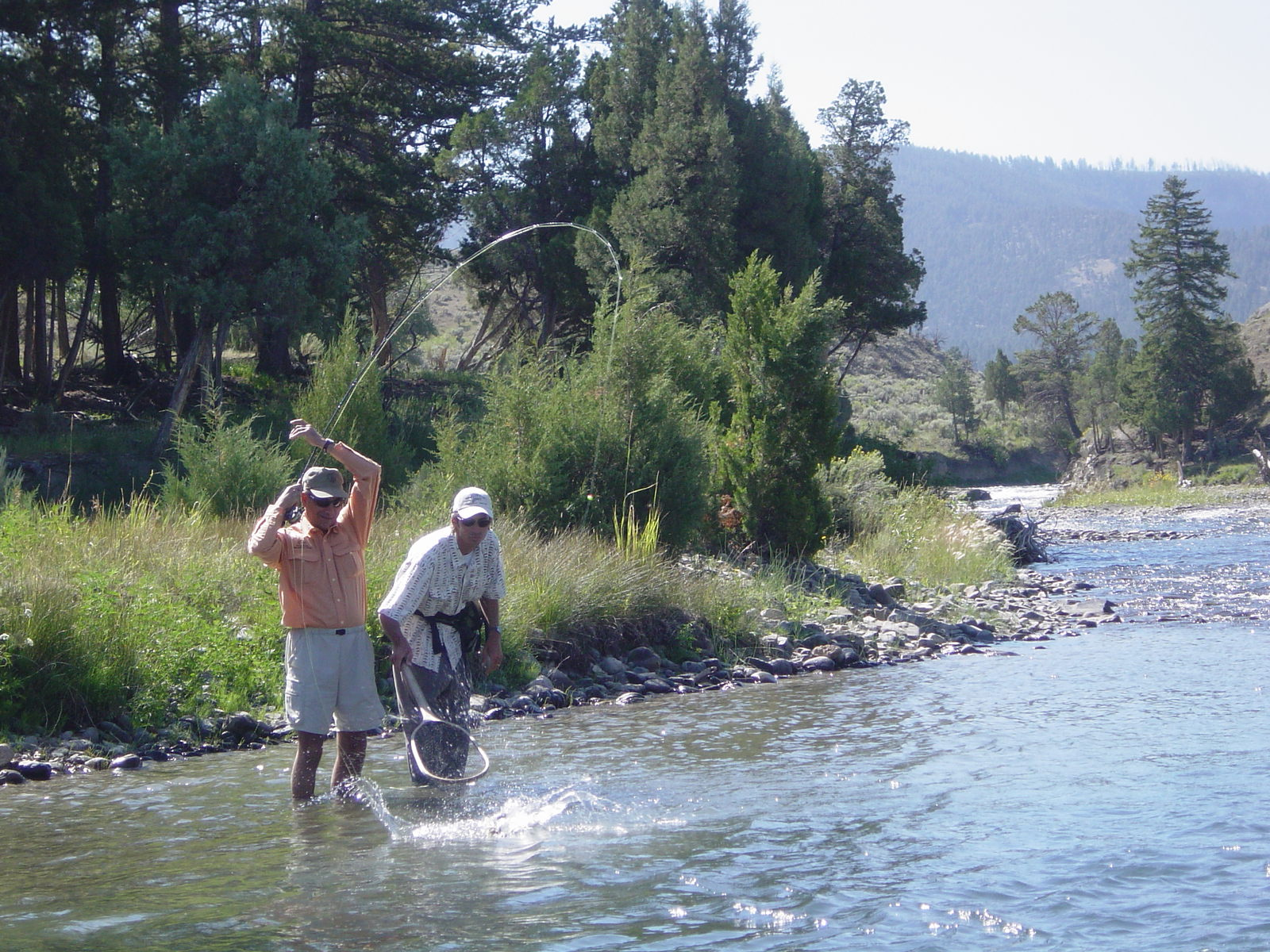 Landing a fish on the Gardiner River; YNP