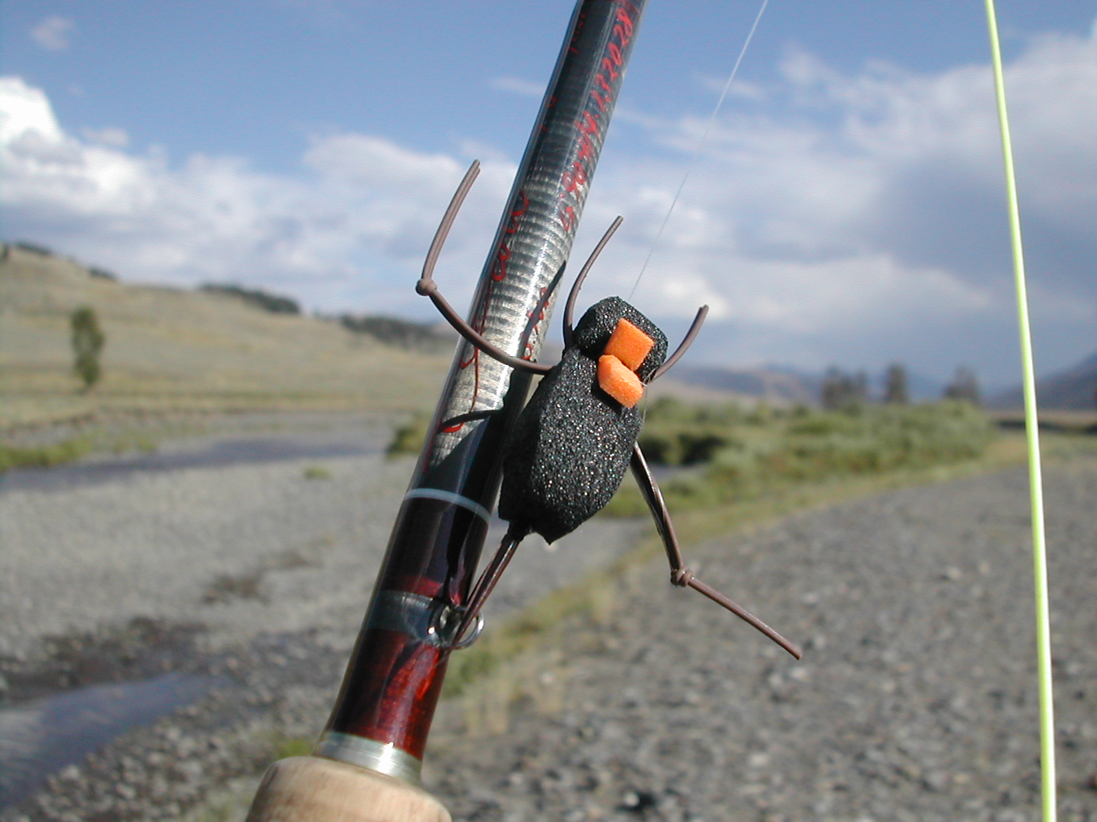 Close up of Mormon Cricket Imitation on Soda Butte Creek; YNP