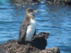 penguin-255527_1920