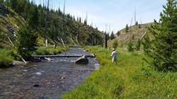Fishing Straight Creek in YNP