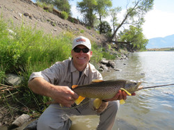 Nice Brown Trout on the Yellowstone River