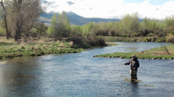 Armstongs Spring Creek