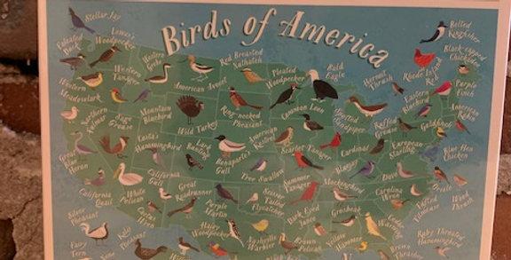 Birds of America Puzzle