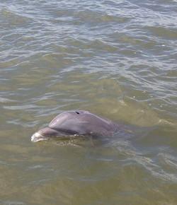 """dolphin says """"hi"""""""