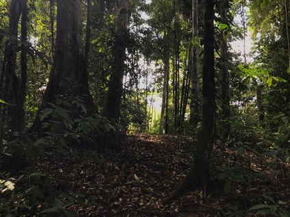 Forests of El Cerro