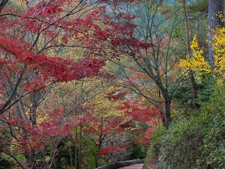 11月は奈良で紅葉を