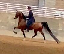 Phillip Riding.JPG