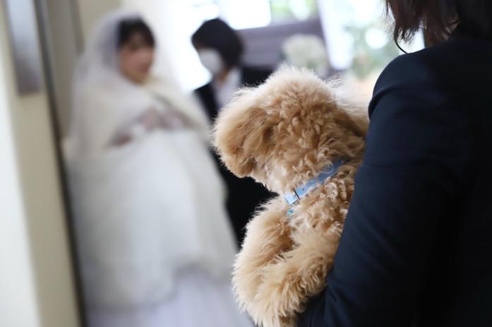 花嫁様を見る姿