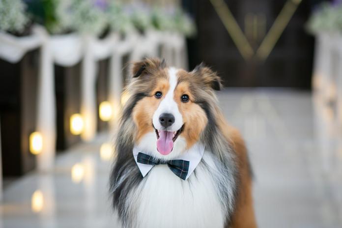 愛犬の笑顔