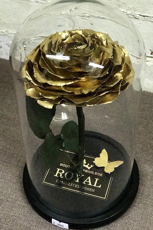 Роза Кинг золотая, высота 33 см