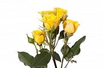 Розы куст Бейб желтый  (Голландия).