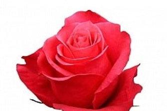 Розы Черри О  (Эквадор)