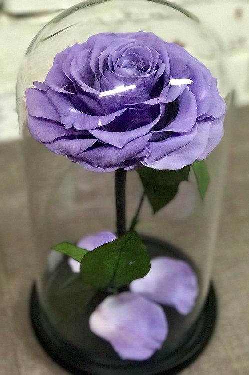 Роза Кинг сиреневая, высота 33 см