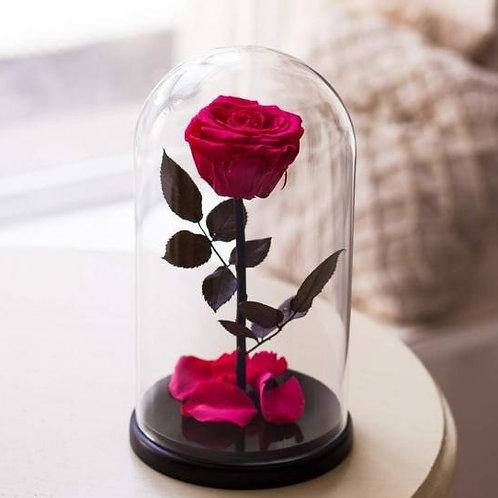 Роза красная, высота 27 см