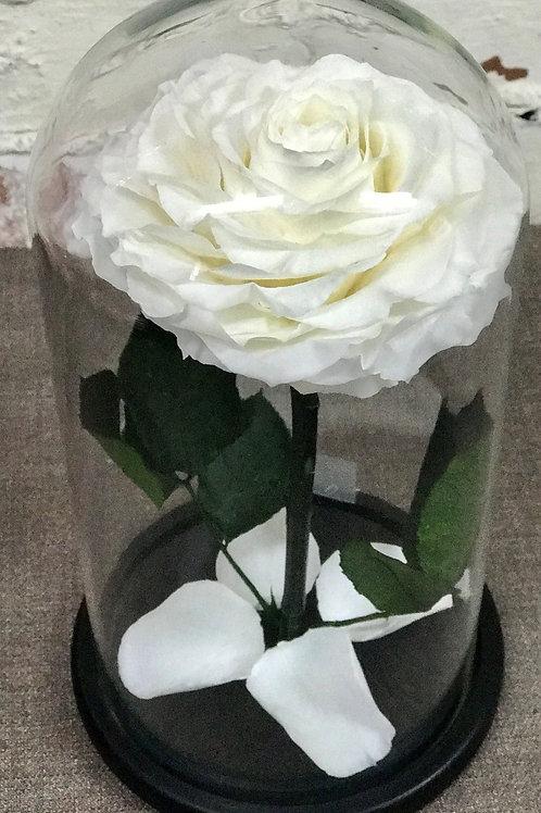 Роза Кинг белая, высота 33 см