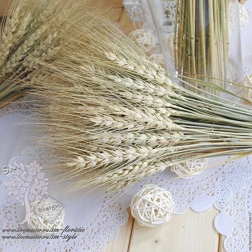 Пшеница натуральная (30 колосков)