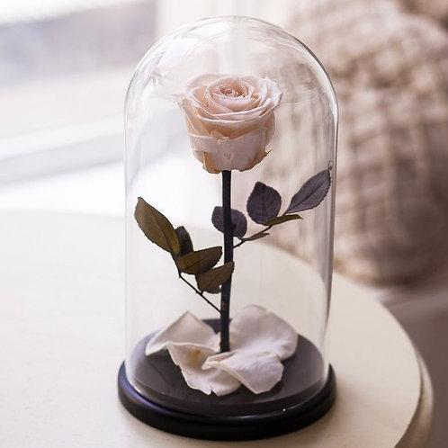 Роза белая, высота 27см