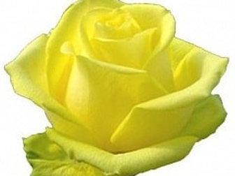Розы Латина  (Эквадор)