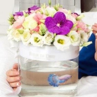 Розы, эустома с рыбкой в коробке-аквариуме