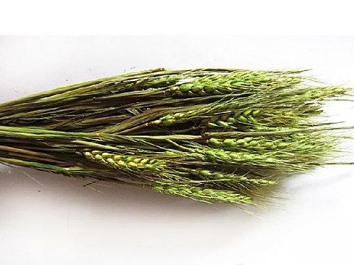 Пшеница Зеленая натуральная