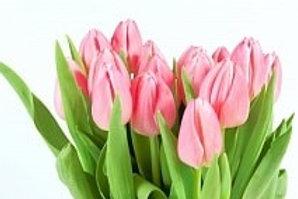 Тюльпаны РОЗОВЫЕ (Голландия)