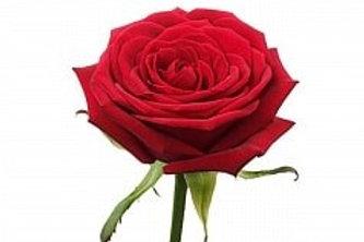 Розы Гран при (Р)