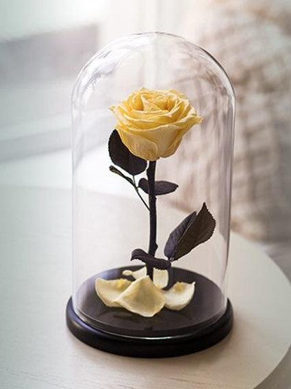 Роза желтая, высота 27 см
