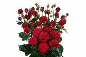 Розы куст Мирабел (Голландия)