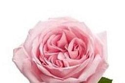Розы Пионовидные Пинк Охара  (Кения)