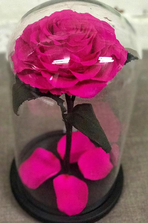 Роза Кинг насыщенно-розовая, высота 33 см