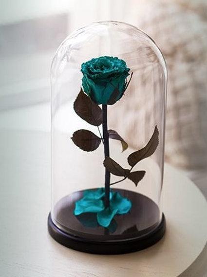 Роза бирюзовая, высота 27 см