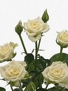 Розы куст Сноуфлейк  (Р)