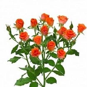 Розы куст Алегрия  (Россия)