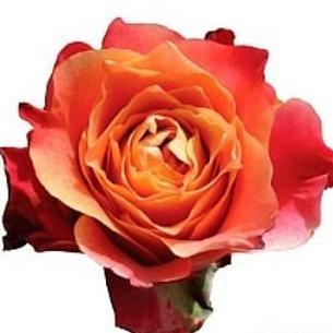 Розы 3D  (Эквадор)