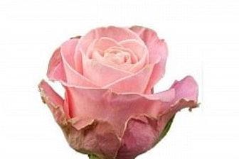 Розы Хемоза  (Эквадор)