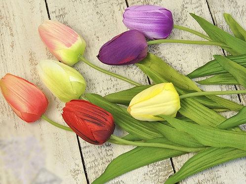 Тюльпаны одиночные