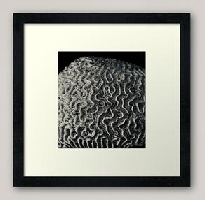 """Coral"" Framed Art Print"