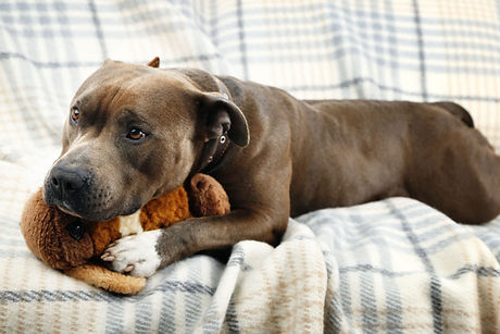 Dog on sofa2.jpg