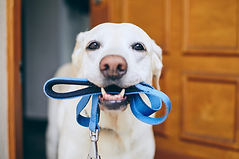 Dog with lead1.jpg