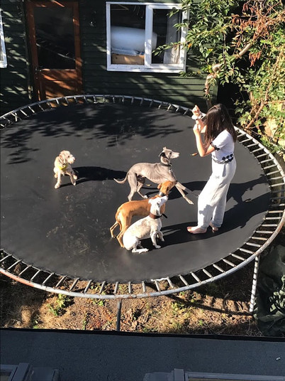 Dog training on the trampoline
