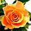 Thumbnail: Ramo de rosas Confianza