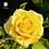 Thumbnail: Ramo de rosas Energí