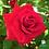 Thumbnail: Ramo de rosas Pasión