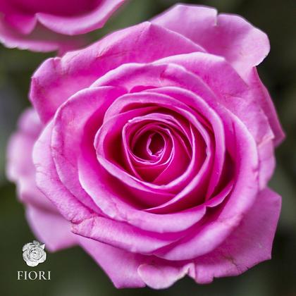 Ramo de rosas Positivismo