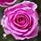 Thumbnail: Ramo de rosas Positivismo