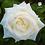 Thumbnail: Ramo de rosas Elegancia